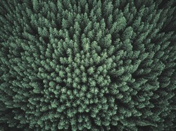 Green Forest. Pine Trees At Woodland From Aerial View. Beautiful Nature Landscape Of Woods