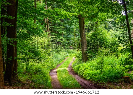 Green forest road. Road way in forest. Summer forest road view