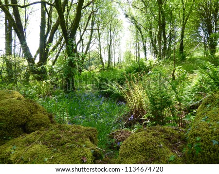 Green forest scene on a sunny day. #1134674720