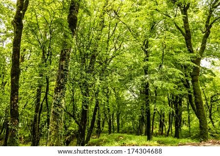 Green forest summer background, Montenegro, near monastery Ostrog. #174304688