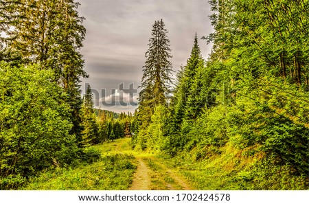 Green forest trail scene view. Forest road view. Forest scene