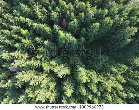 Green forest tree tops birds eye view - Spruce forest drone photo - Forestry industry aerial picture