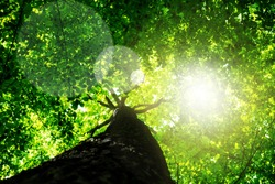 Green forest. Tree with green Leaves and sun light. Bottom view background