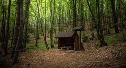Green Forest trees and old wooden shed or house. Colorful landscape with enchanted trees and Scenery with path in dreamy spring green forest. Bulgaria wide country landscape