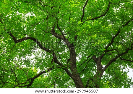 green forest trees backgrounds #299945507