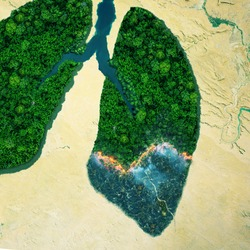 Green forest trees is burning, top view. Forest fire, aerial view. Green lungs of planet Earth. Concept of nature and rainforest protection, nature breathing and natural co2 reduction.