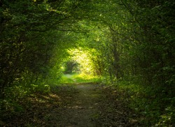 green forest tunnel