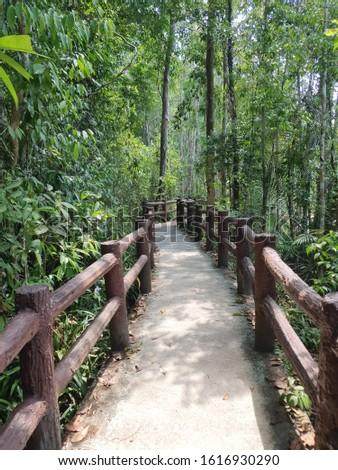 Green Forest walkway also called canopy walks, treetop walks or treetop walkways