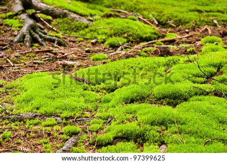 Green forest with old trees with lichen and moss