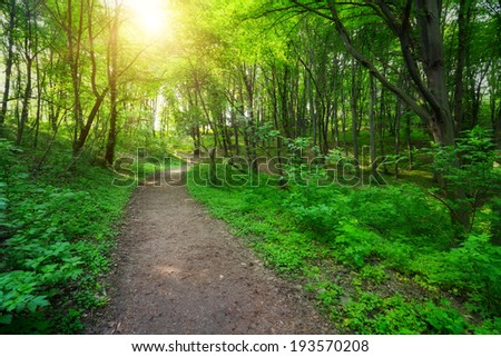 green forest with pathway and sun light between the trees