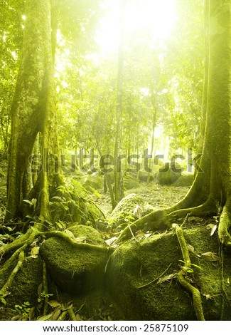Green forest with ray of light #25875109