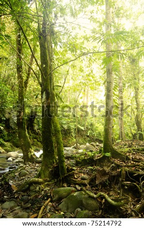 green forest with ray of lights