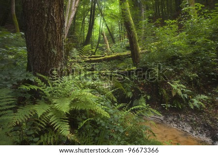 green forest with river and dense vegetation