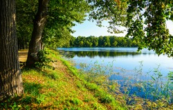Green forrest river trees at water nature scene