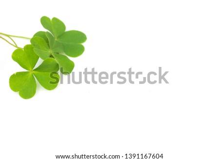 Green four-leaf clover leaf on white background. #1391167604