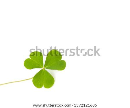 Green four-leaf clover leaf on white background. #1392121685