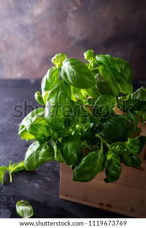 Green fresh basil on stone background #1119673769