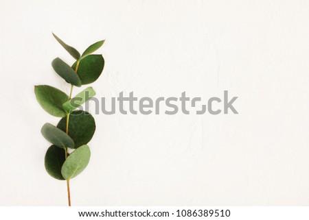 Green fresh eucalyptus twig on white concrete background top view, minimalistic botanical decor background #1086389510