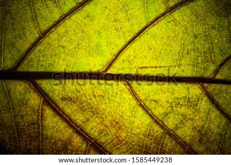 green fresh leaf veins macro texture nature background