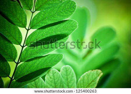 Green fresh leaves background