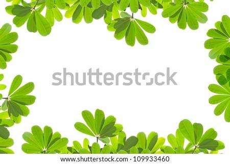green fresh leaves frame isolated on white background