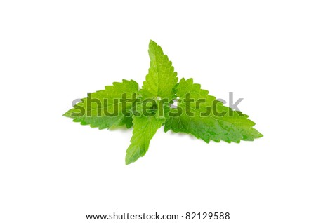 Green fresh mint isolated on white background