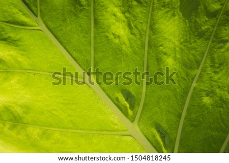 Green fresh plant grass closeup for background ,closeup nature view of green leaf
