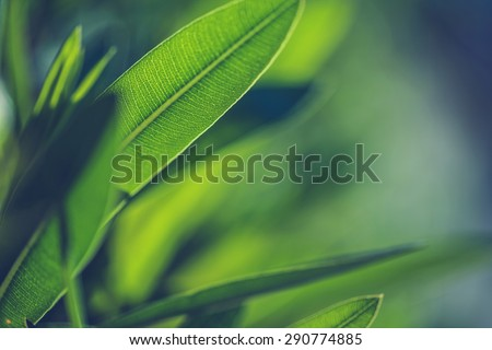 Green fresh plants grass closeup for background #290774885
