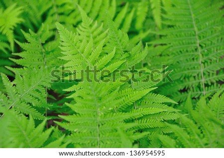 Green fresh spring ferns in the forest