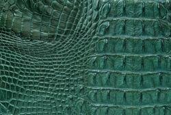 Green Freshwater crocodile bone skin texture background.
