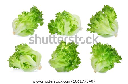 green frillice iceberg lettuce isolated on white background #1061775407