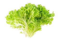 Green frisee lettuce bunch isolated on white background