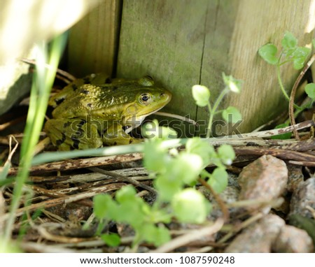 Green frog in the garden #1087590248