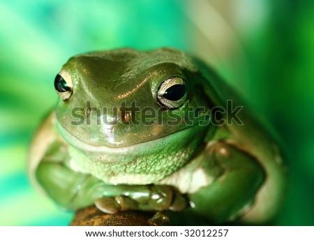 Green frog resting on branch, shallow depth of field, skin slightly moist