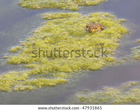 green frog resting on water plants