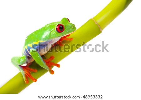 green frog sitting on bamboo