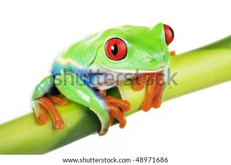 Green Frog Sitting On Bamboo Tree Stock Photo 48971686 : Shutterstock