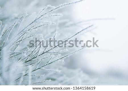 Green frozen plant in white winter #1364158619