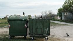 Green garbage bins and crow birds around.