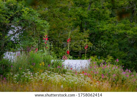 Green garden and wild flowers