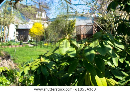 Green garden at spring with plants and flower in Germany Europe #618554363