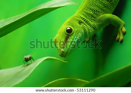green gecko lizard on a vertical wall of the terrarium is surrounded by green leaves of plants, focus on the eye of lizards