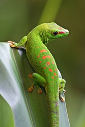 Green gecko on the leaf