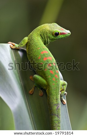 Green gecko on the leaf
