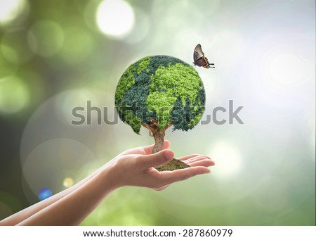 Stock Photo Green globe tree on volunteer's hand for sustainable environment and natural conservation  in CSR concept