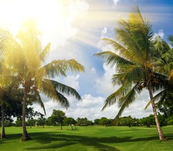 green golf course and blue sky. palm trees in sunlight. Sunset landscape in Dominican Republic. Nature of caribbean island