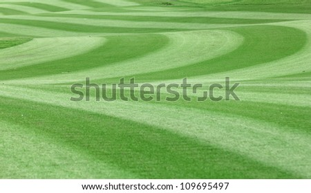 Green golf fairway