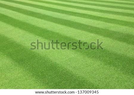 Green  golf  Fairway textured pattern