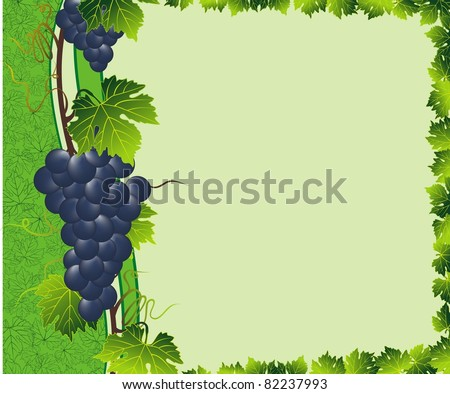 green grape border