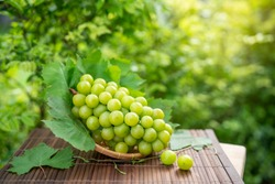 Green grape in Bamboo basket on wooden table in garden, Shine Muscat Grape with leaves in blur background